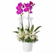 Beyaz gül ve Lilyumlu Mor Orkide