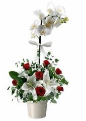 Lilyum Ve Güllü Orkide