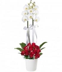 Kırmızı Güllü Orkide