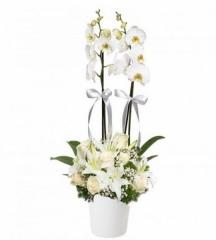 Beyaz gül ve Lilyumlu Orkide